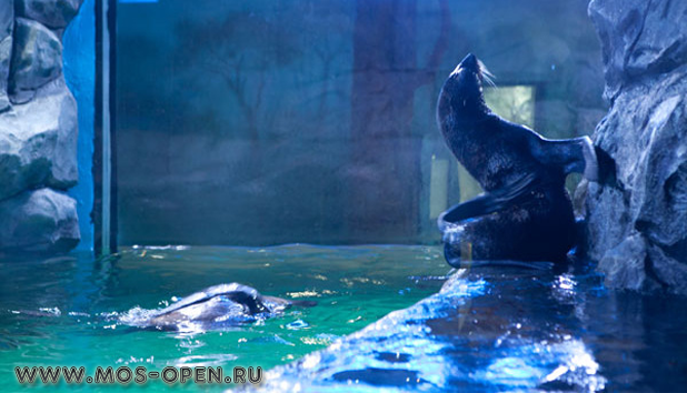 Океанариум в ТРЦ «РИО» на Дмитровском шоссе