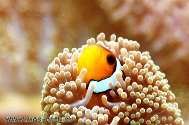 Океанариум «Морской аквариум» на Чистых прудах