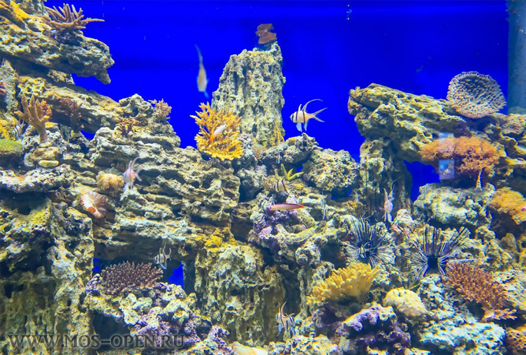 Океанариум «Москвариум» на ВДНХ