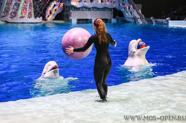 Дельфинарий на ВДНХ в Москве