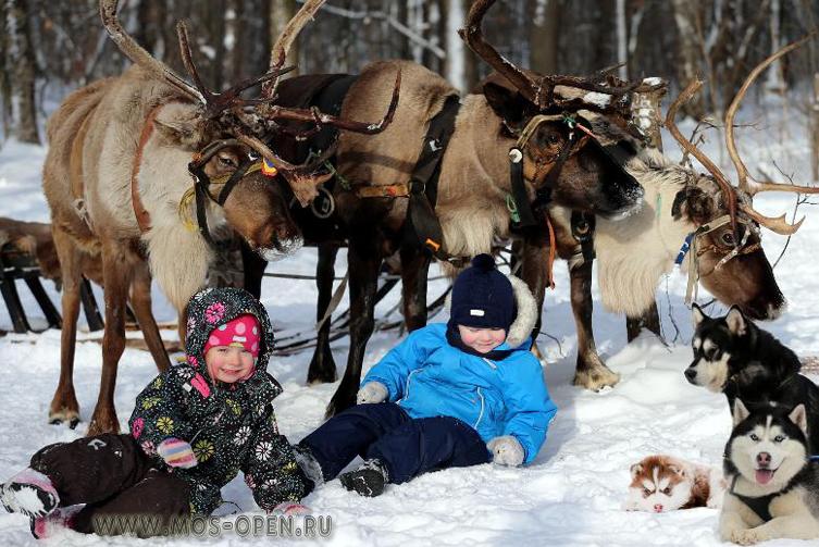 Хаски с зоофермы в городе Дзержинске