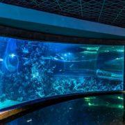 Океанариум в Крокус Сити Холл